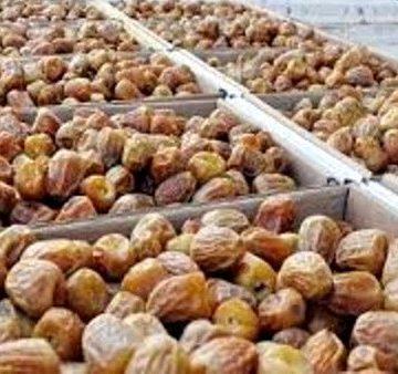 L'Arabie saoudite offre 350 tonnes de dattes aux réfugiés sahraouis – Algérie Presse Service