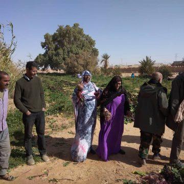 Minister of Economic Development observes agricultural harvest in Wilaya of Smara | Sahara Press Service